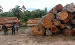 Força-tarefa contra desmatamento apreende madeira e equipamentos em cinco municípios do Pará