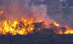 Bombeiros registram crescimento no número de queimadas no sudeste do Pará