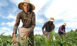 FIDA: investimento em agricultura familiar é maneira mais eficaz de reduzir pobreza rural