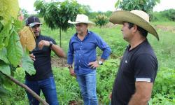 SEMPRU retoma projeto de fruticultura que já beneficiou mais de 50 famílias em Canaã