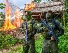 Polícia destrói mais de 60 mil pés de maconha no Pará