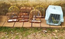 Operação apreende 700 kg de pescado, armas e animais silvestres na região do Lago de Tucuruí