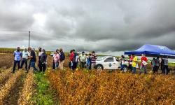 Dia de campo apresenta resultados de pesquisas com grãos em AL