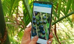 Aplicativo e plataforma digital fornecem soluções tecnológicas para sustentabilidade na Amazônia