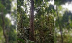 Tecnologia garante origem legal e sustentável de madeiras