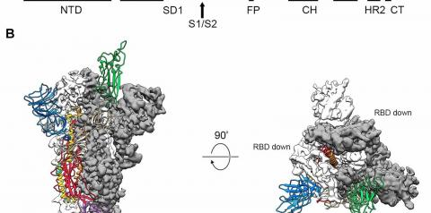 Cientistas decifram estrutura no novo coronavírus que pode ajudar na fabricação de vacinas