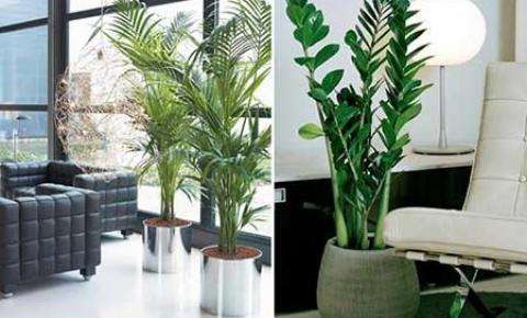 No momento de crise, plantas são as novas queridinhas da decoração