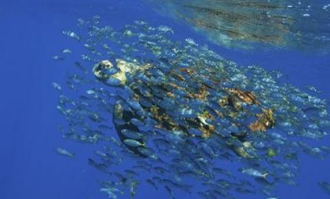 Academia Brasileira de Ciências lança documento em defesa de Oceanos