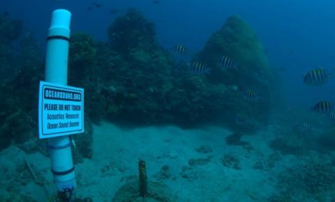 Bioacústica é usada para conservar biodiversidade em ilhas oceânicas