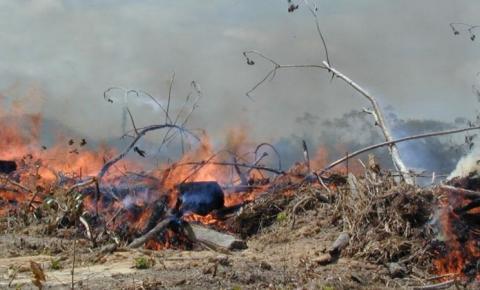 Pará é o 2º estado com mais queimadas em agosto, diz Inpe