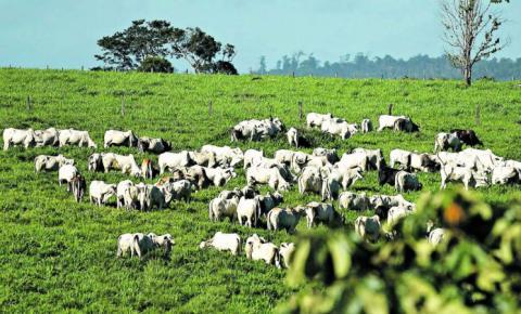 Setor de carnes do Pará tem prejuízos de R$ 6,6 bilhões